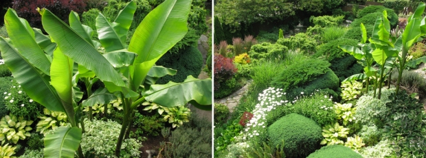 July 2012:  Garden overview with banana trees