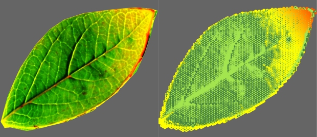 Transforming leaf imagery with technology creates digital patterning.